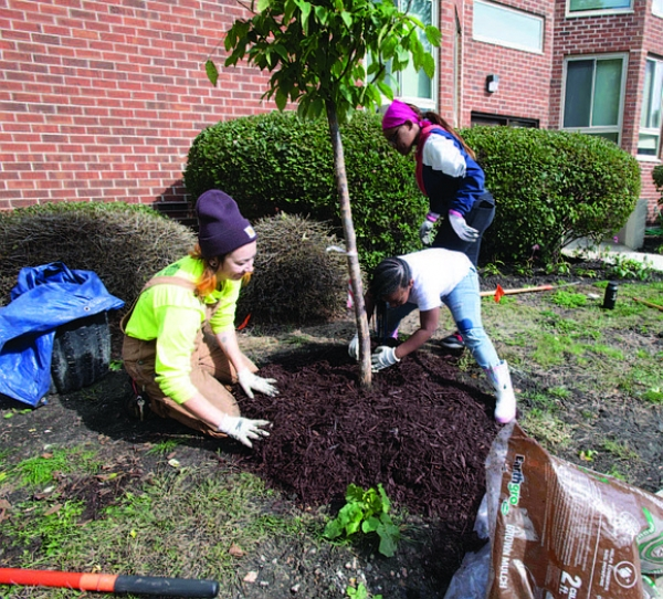 volunteer's planting trees
